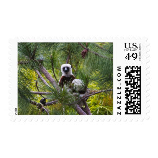 Coquerel's Sifaka in the forest Postage Stamp