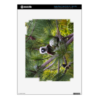 Coquerel's Sifaka in the forest Decals For iPad 3