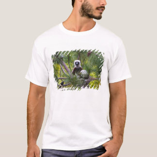 Coquerel's Sifaka in the forest T-Shirt