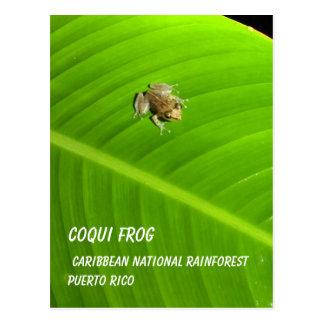 Coqui Frog, Puerto Rico Postcard
