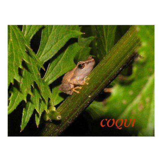 Coqui Postcard