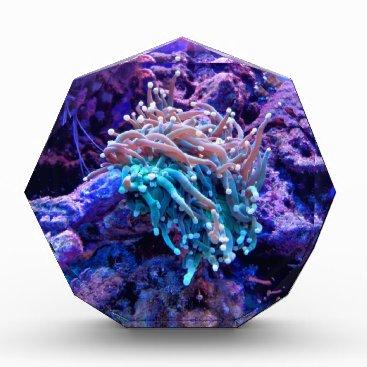 Beach Themed coral-1053837 acrylic award