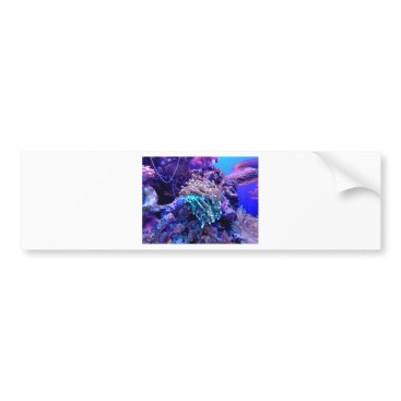 Beach Themed coral-1053837 bumper sticker