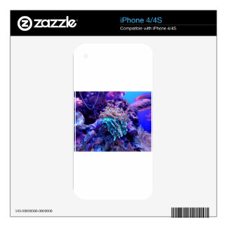 coral-1053837 skin for the iPhone 4