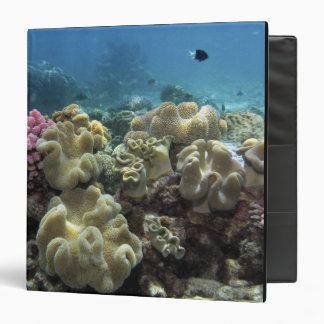 Coral, Agincourt Reef, Great Barrier Reef, Binder