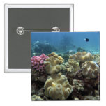 Coral, Agincourt Reef, Great Barrier Reef, 2 Inch Square Button