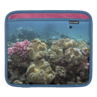 Coral, Agincourt Reef, Great Barrier Reef, iPad Sleeves