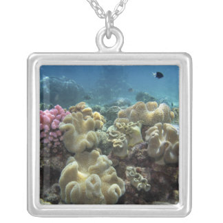 Coral, Agincourt Reef, Great Barrier Reef, Pendants