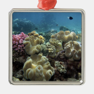 Coral, Agincourt Reef, Great Barrier Reef, Square Metal Christmas Ornament