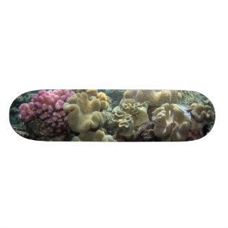 Coral, Agincourt Reef, Great Barrier Reef, Skateboard Deck