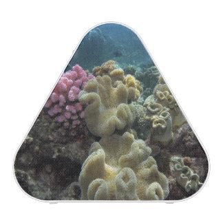 Coral, Agincourt Reef, Great Barrier Reef, Speaker