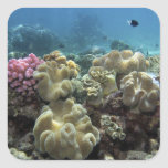 Coral, Agincourt Reef, Great Barrier Reef, Square Sticker