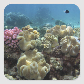 Coral, Agincourt Reef, Great Barrier Reef, Stickers