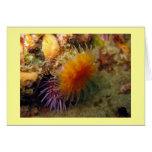 Coral anaranjado de la taza tarjeton