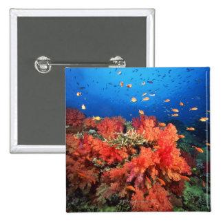 Coral and fish 2 inch square button