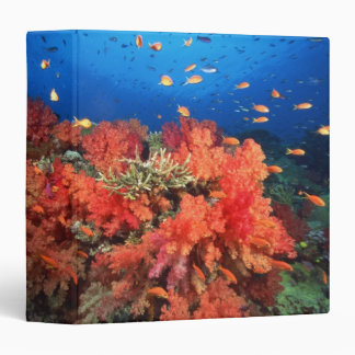 Coral and fish 3 ring binders
