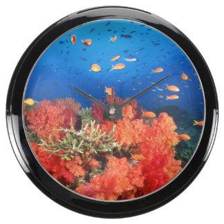 Coral and fish aqua clock