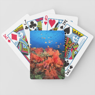 Coral and fish bicycle playing cards