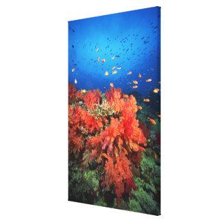 Coral and fish canvas print