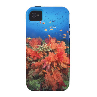 Coral and fish Case-Mate iPhone 4 cases