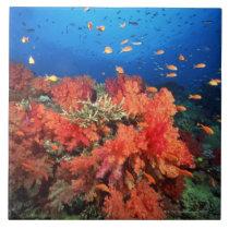 Coral and fish ceramic tile