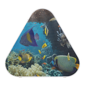Coral and fish in the Red Sea, Egypt Bluetooth Speaker
