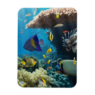Coral and fish in the Red Sea, Egypt Magnet