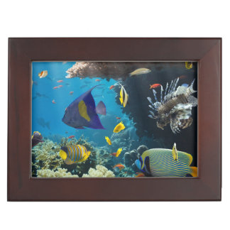 Coral and fish in the Red Sea, Egypt Memory Box