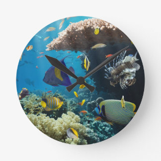 Coral and fish in the Red Sea, Egypt Round Clock