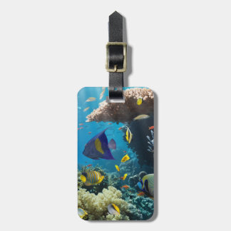 Coral and fish in the Red Sea, Egypt Tag For Bags