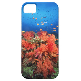 Coral and fish iPhone 5 cover