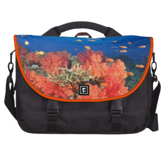 Coral and fish laptop messenger bag