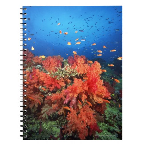 Coral and fish notebook