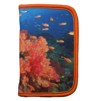 Coral and fish planner