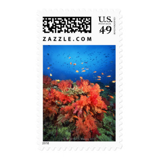 Coral and fish postage stamp