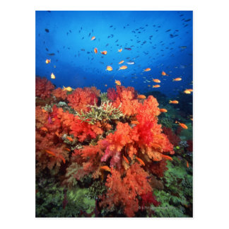 Coral and fish postcard