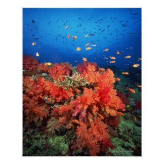 Coral and fish poster