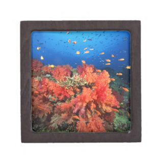 Coral and fish premium keepsake boxes
