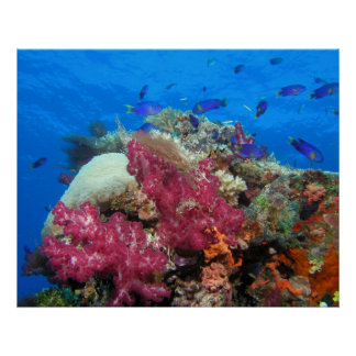 Coral and Fish Print