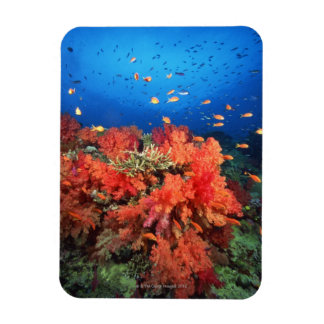 Coral and fish rectangular photo magnet
