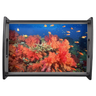 Coral and fish serving platter