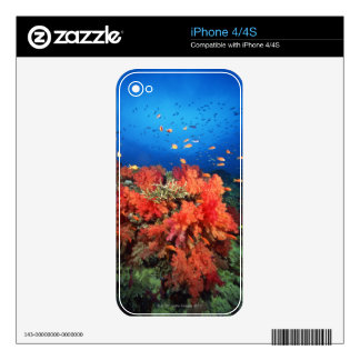 Coral and fish skin for the iPhone 4S