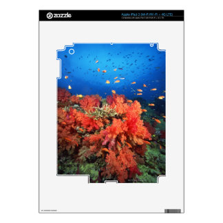 Coral and fish skins for iPad 3