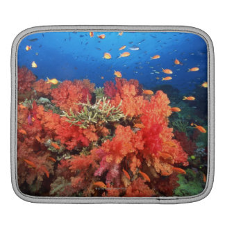 Coral and fish sleeves for iPads