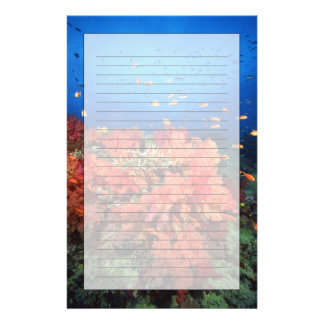 Coral and fish stationery