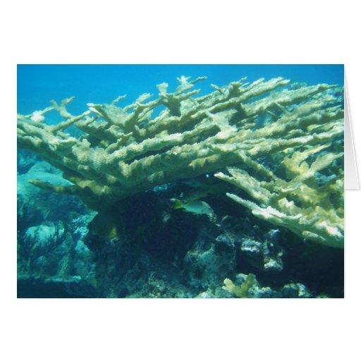 Coral Bahamas de Elkhorn Tarjeta De Felicitación