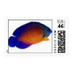 Coral Beauty Angelfish Postage Stamp