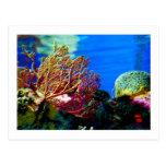 Coral brillante postales