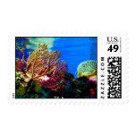 Coral brillante sellos