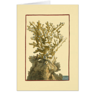 Coral by the Sea Card